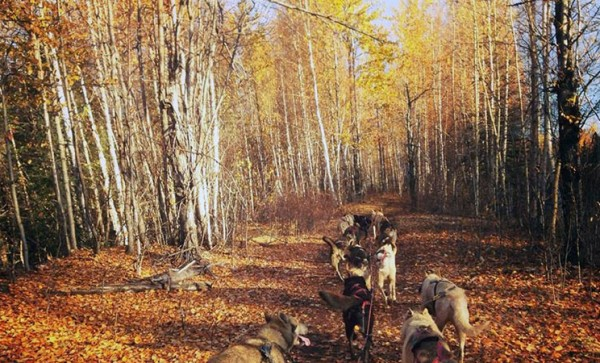 SAGA Autum Dog Sledding Adventure 800×450